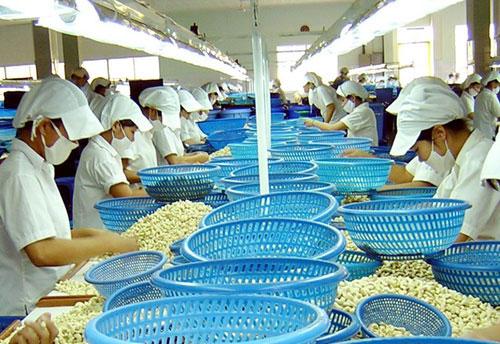 Cứ hai hạt điều mà người Mỹ ăn, có một hạt điều mua từ VN