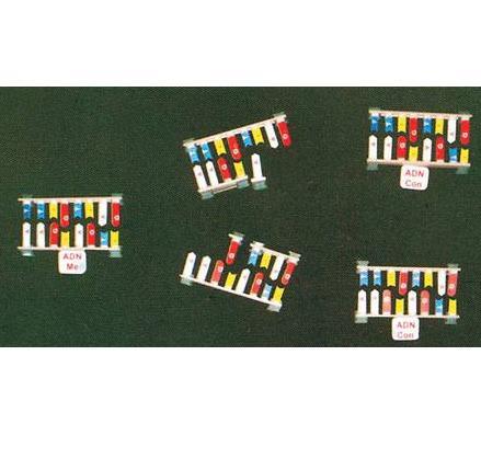 Mô hình nhân đôi ADN TGCN-32421 Vietnam